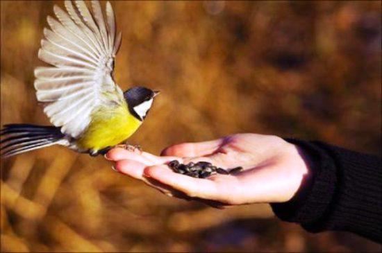 покормить птиц с руки