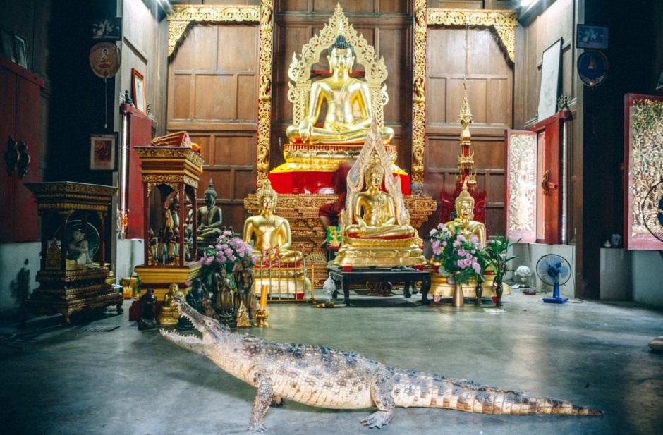 храм с крокодилом