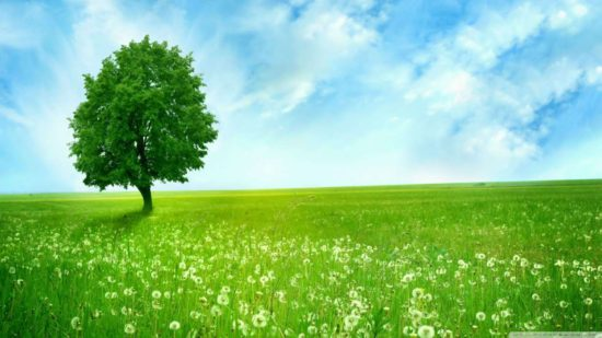 дерево, трава, небо
