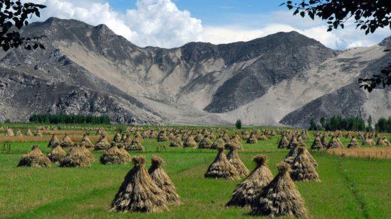 Урожай в Тибетской деревне