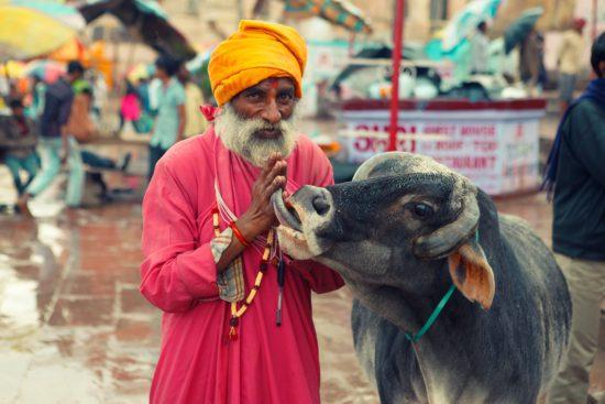 индус и корова