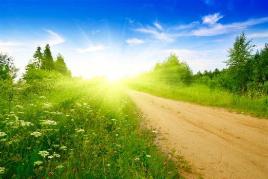 деревья, небо, дорога