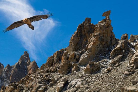 Птицы в горах