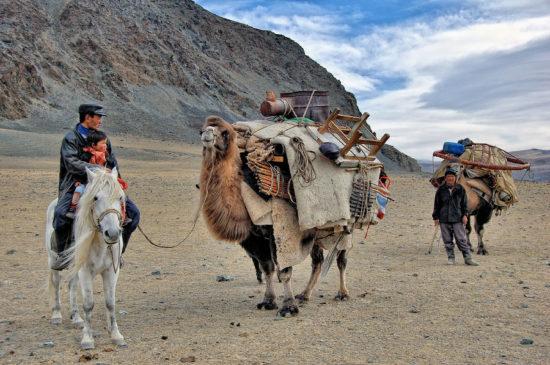 юрта на верблюдах
