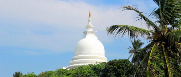 пальмы в Шри-Ланке