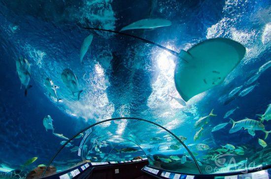 люди внутри Океанариума