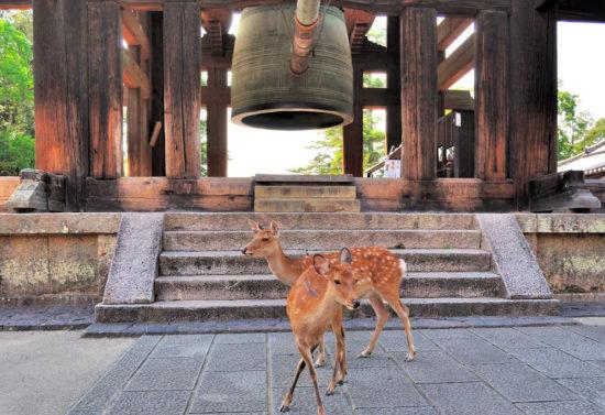 олени гуляют по территории храма