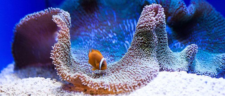рыбы и морские животные