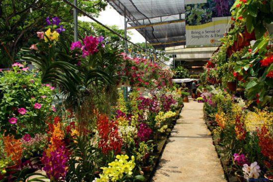цветы в саду Тайланда