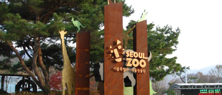 зоопарк в Корее