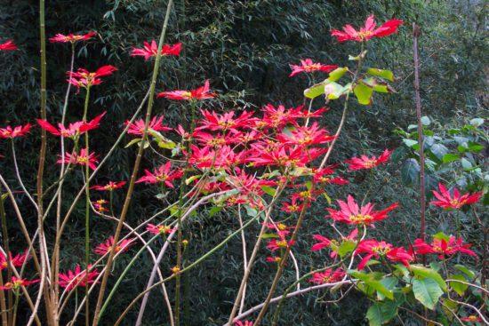растительность острова Тайвань