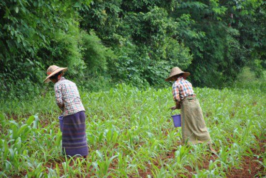женщины на плантациях