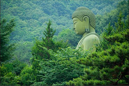 природа и буддизм