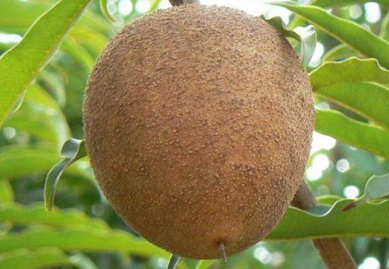 фрукт на ветке