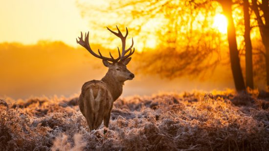 животное на природе