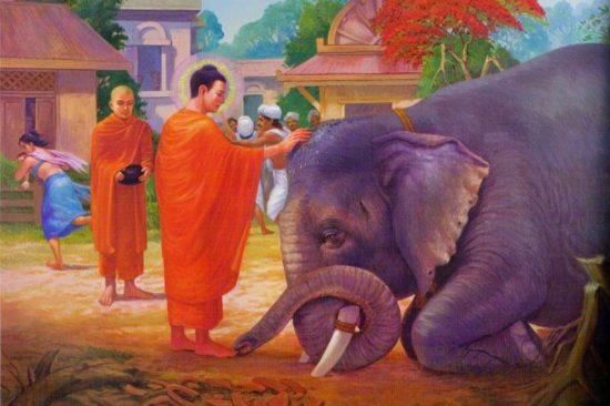 Укрощение слона