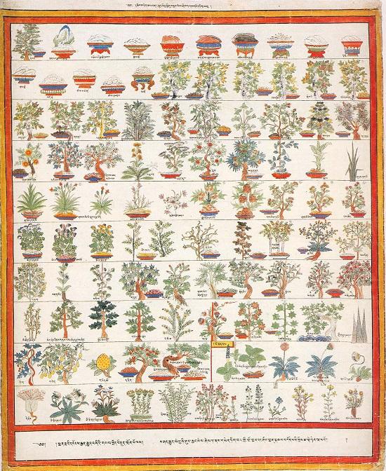тибетской медицины