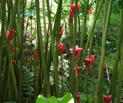 цветки в роще