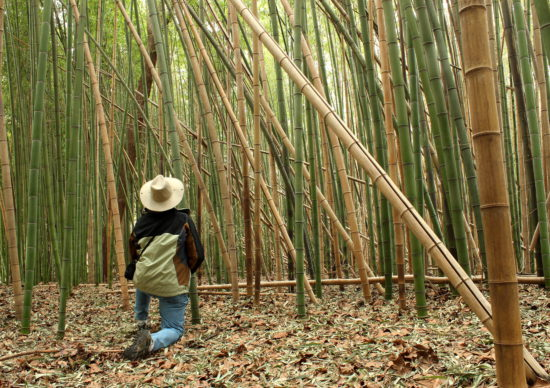 поклонение бамбуковой роще