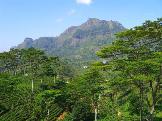 горы Цейлона