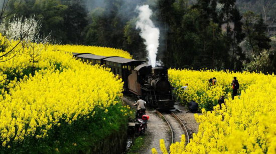 цветы в Китае