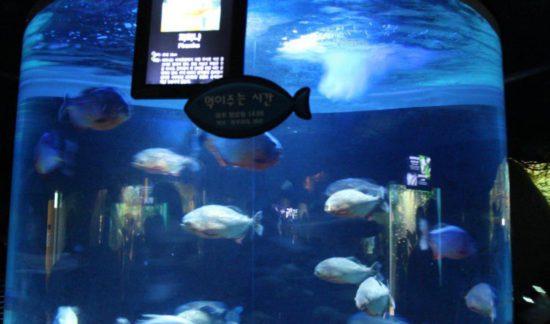 угри в аквариуме