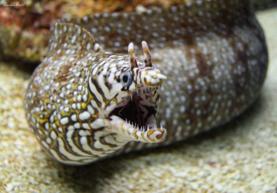 рыба в океанариуме
