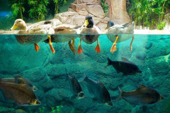 птицы в воде