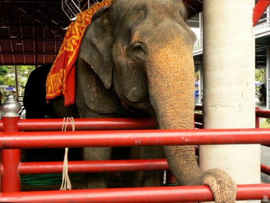 слон в парке