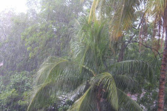 дожди в тропиках