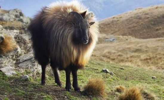Тар в Тибете